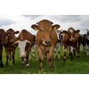 Santé des ruminants : observer et prévenir grâce à l'outil Panse Bêtes
