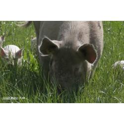 5 mai 2021 : Produire du porc bio