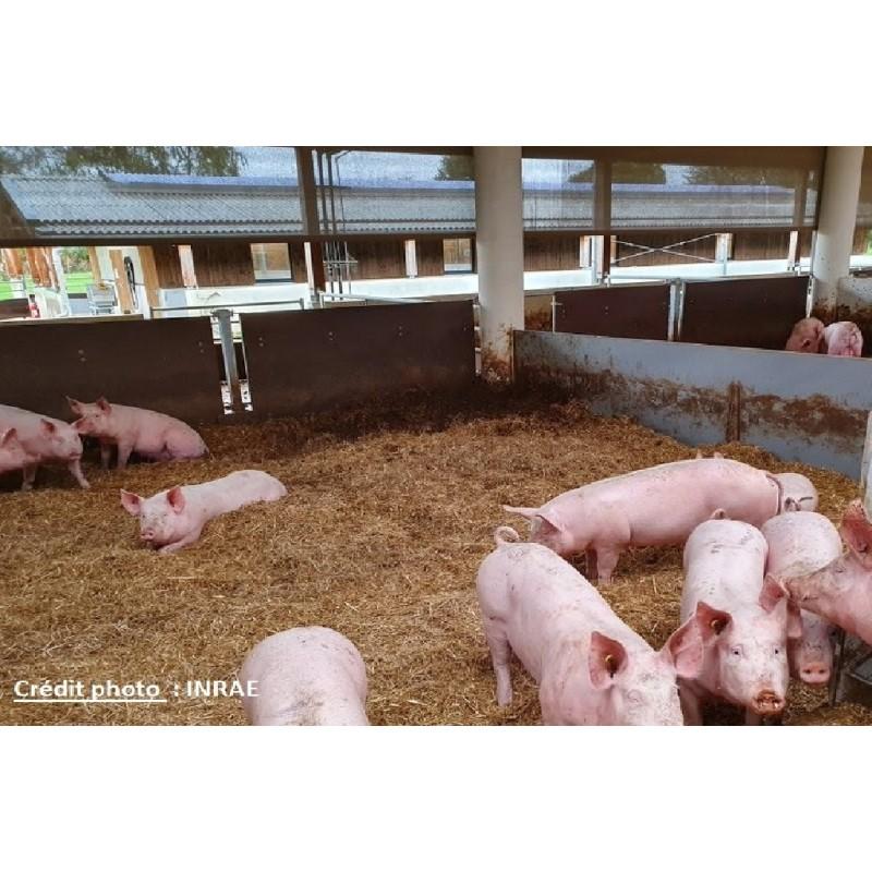 6 mai 2021 : Alimentation du porc en AB