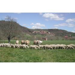 16 au 25 mars 2021 : Produire des agneaux en AB : repères techniques et économiques