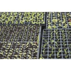 Maraîchage et Légume Bio / 3 Appréhender la production de semences et de plants biologiques
